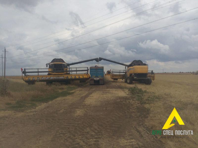Перевозка зерновых: уборочные работы